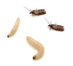 Eb Exterminating Moths